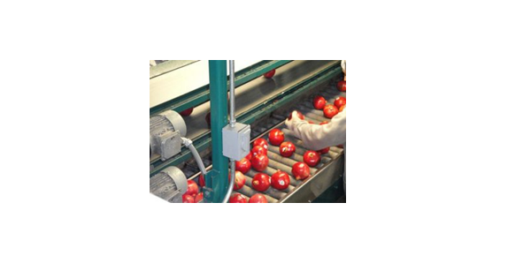 Pulp Processing - Food Buddies